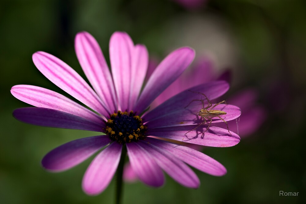 Daisy with Spider by Romar