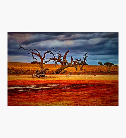 """""""Rusty Lakebed"""" Photographic Print"""
