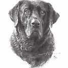 old black lab drawing by Mike Theuer