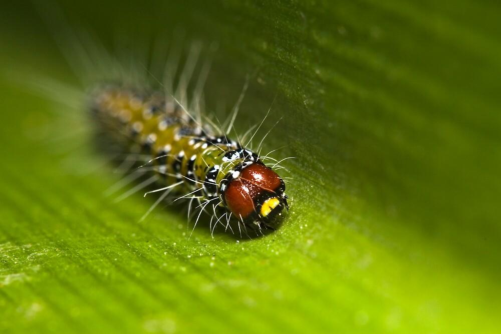 Caterpillar by Colin  Ewington