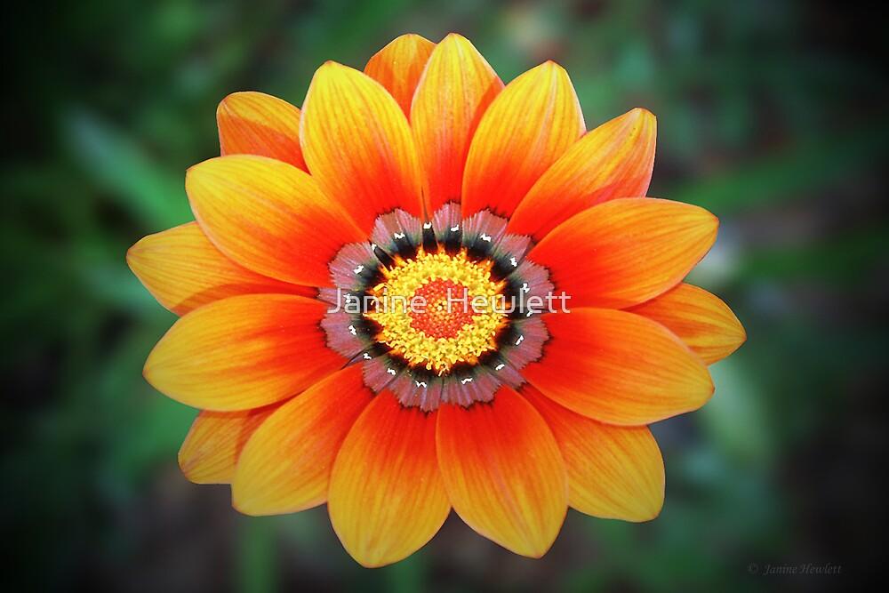 Orange.. by Janine  Hewlett