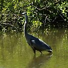 Heron on lake by Chris Hayworth