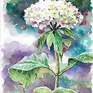 Irish Hydrangea by Eva Crawford