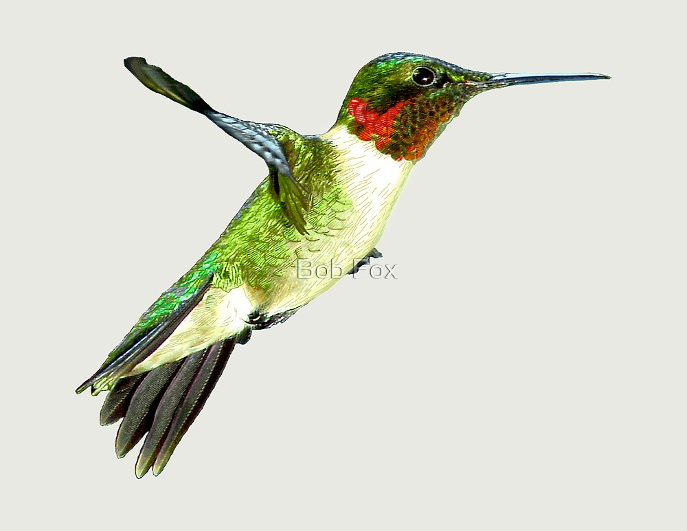 Hummingbird In Flight by Bob Fox