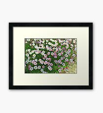 Flowering moss many  bright flowers Framed Print