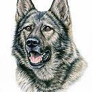 Grauer Schäferhund - Grey German Shepherd Dog von Nicole Zeug