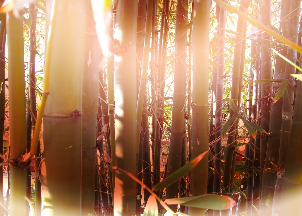 Morning Shine Bamboo by TLCGraphics