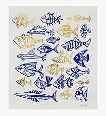 Gold & Navy Inked Fish Photographic Print