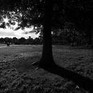 Camperdown Memorial Park, Newtown by John  Cuthbertson | www.johncuthbertson.com