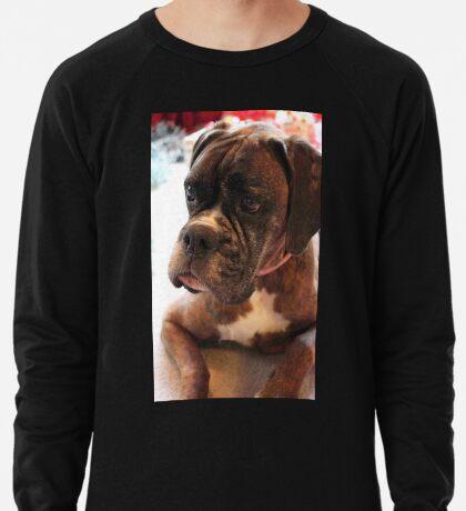 Weihnachtstagesportrait - Boxer-Hunde-Reihe Leichtes Sweatshirt