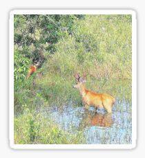 Landscape Pantanal Sticker