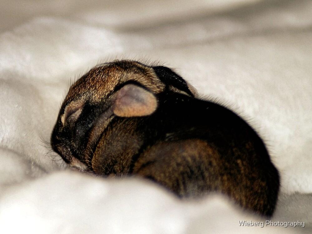 Sweet Dreams by Susie Wieberg