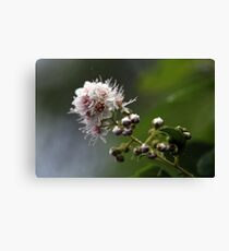 Willow flowers Canvas Print