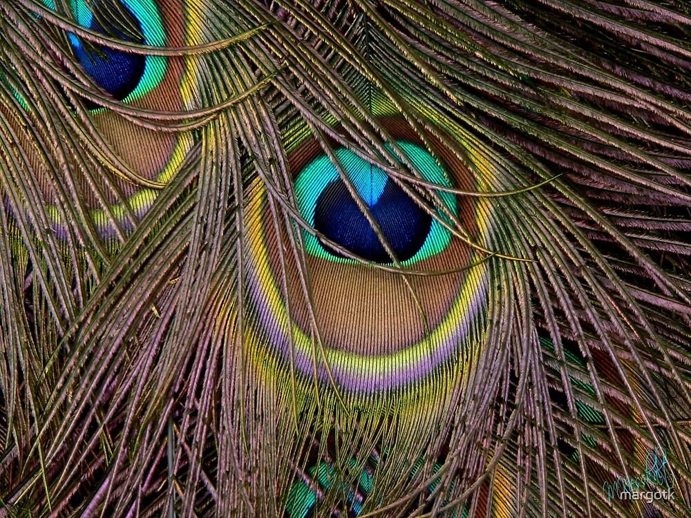 Peacock Plumage by margotk