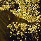 Night Blossoms 1 by satsumagirl
