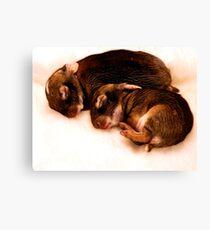 Bunny Love Canvas Print