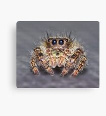 """"""" Don King"""" Jumping Spider Canvas Print"""