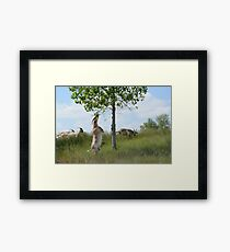 Goat climbing up to eat tree leaves Framed Print