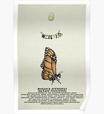 Metamorphosis Series - Monarch Poster