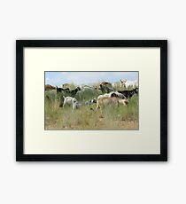 Kiko Goat herd Framed Print