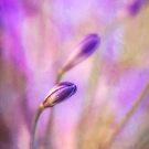 Reverie in purple by Celeste Mookherjee