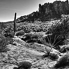 Sonoran Desert at Lost Dutchman State Park Arizona by Roger Passman
