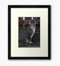 Scooter Framed Print