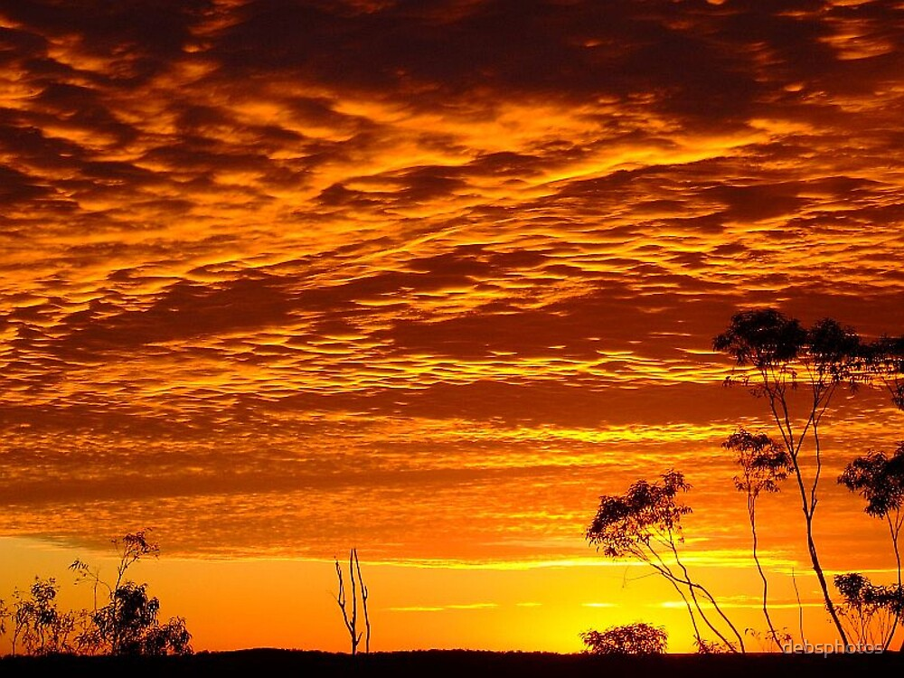 Citrus Dawn..... by debsphotos