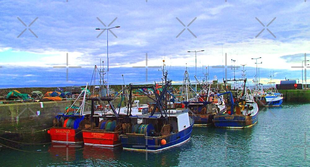 Pittenweem Fishing Boats by Tom Gomez
