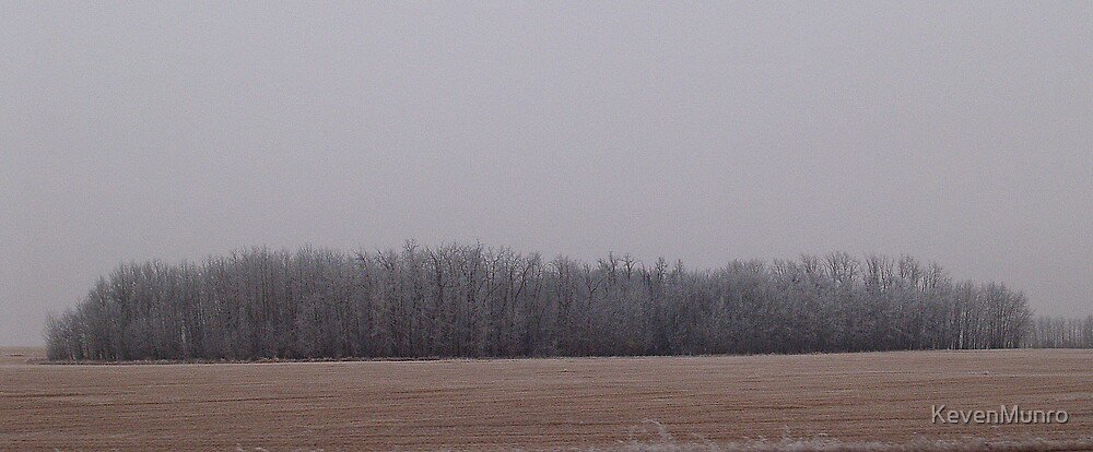 Pubescent stand of trees by KevenMunro