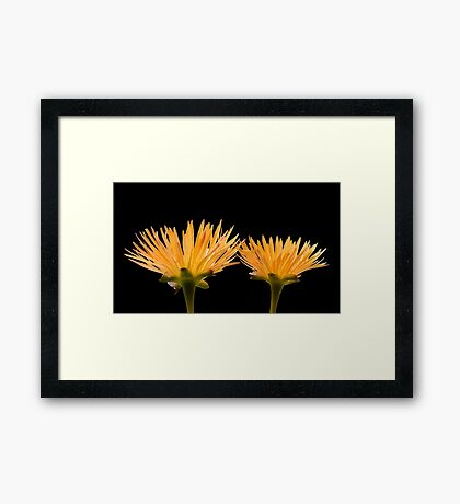 Golden Ice Plant Framed Print