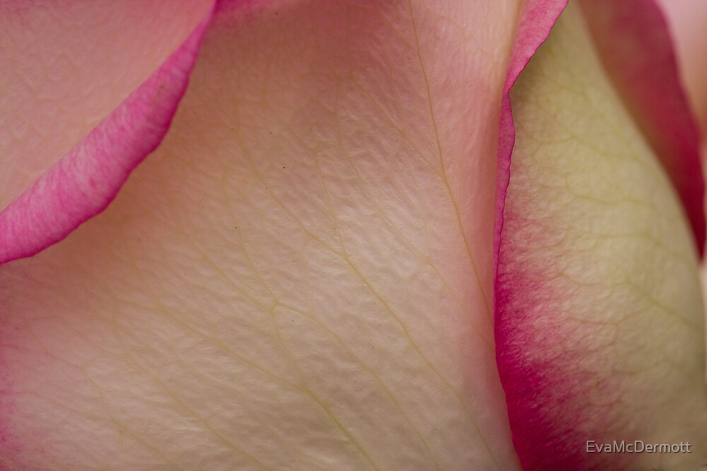 A Touch of Pink by EvaMcDermott