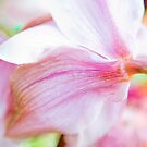 Orchid by Mimiq