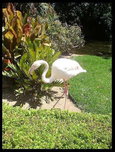 Flamingo by elizabethrose05