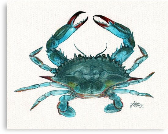 """""""Blue Crab"""" by Amber Marine, watercolor painting, © 2013 by Amber Marine ~ Wildlife Artist ~ © 2004-2018"""