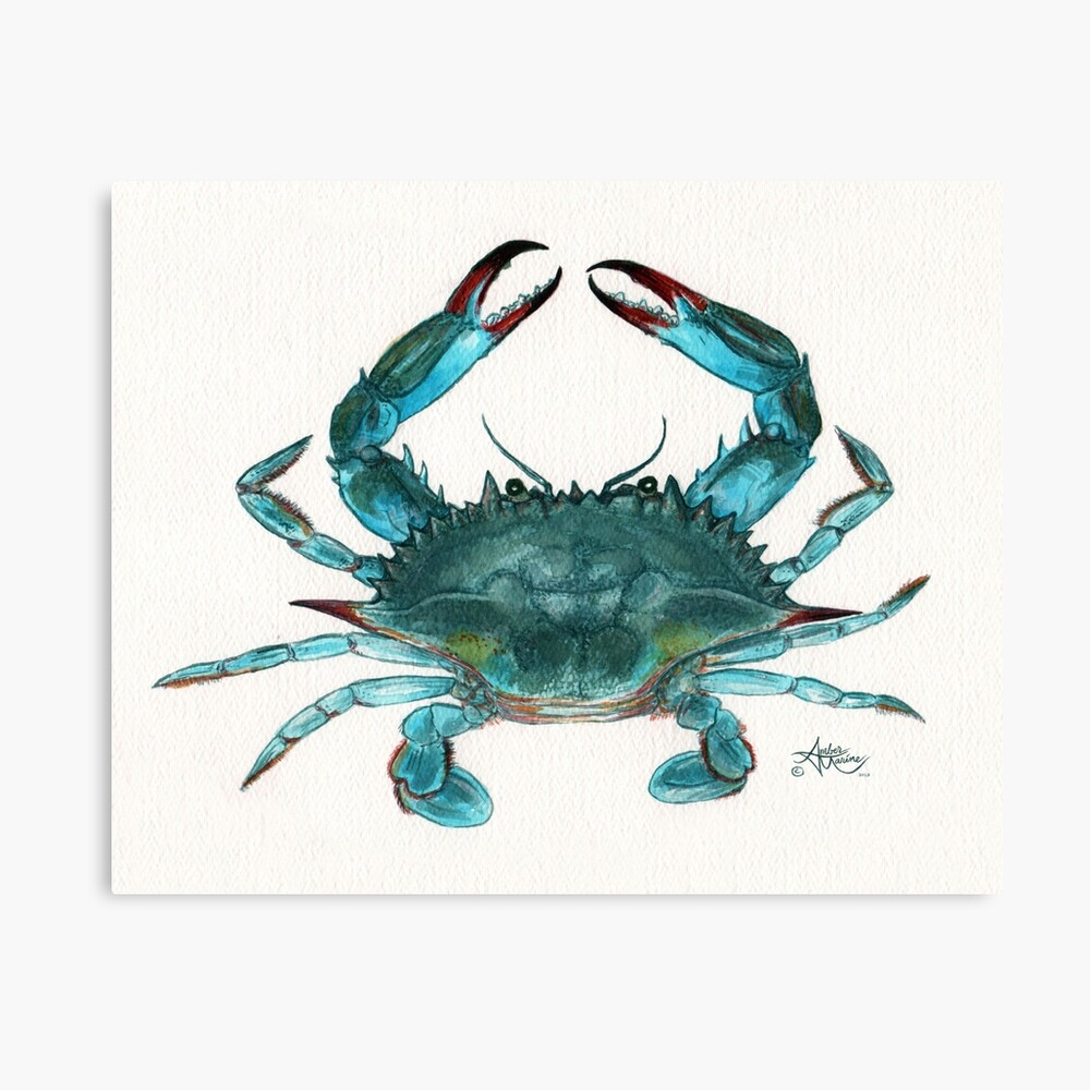 """""""Blue Crab"""" by Amber Marine, watercolor painting, © 2013 Canvas Print"""