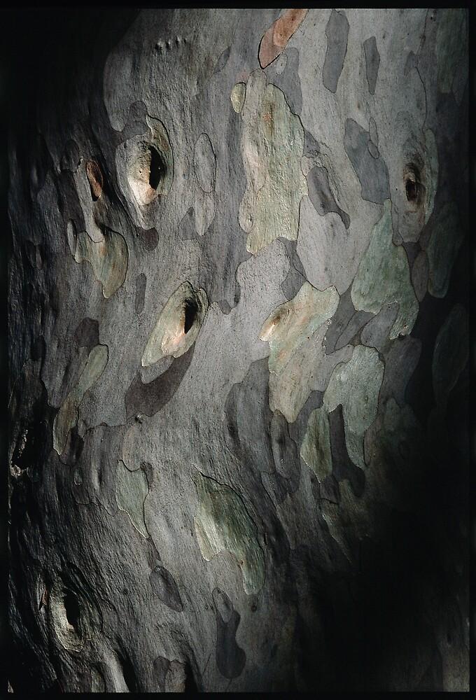 Spotted-Gum by matt mackay
