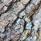 Textured Bark by Margaret Stevens