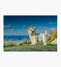 Billy at the dunes  Hayle, Cornwall. Photographic Print