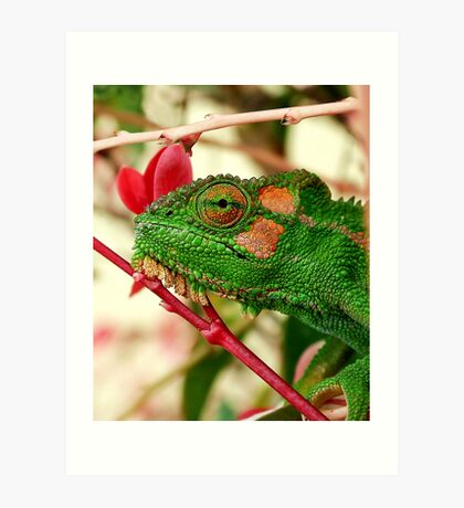 Rosey Cheeks Art Print