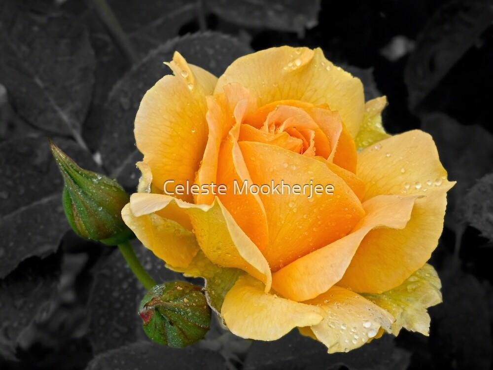 Golden rose by Celeste Mookherjee