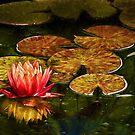 Die kunstvolle Lilie von Celeste Mookherjee