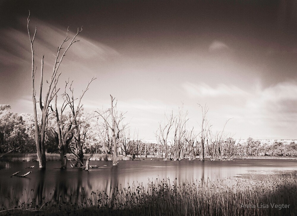The Murray River by Anna Lisa Vegter