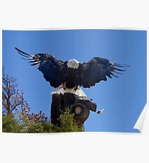 American Bald Eagle Cleared for Landing Poster