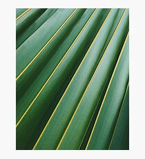 Tropical Plant Photographic Print