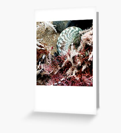untitled #144 [flat rocks] Greeting Card