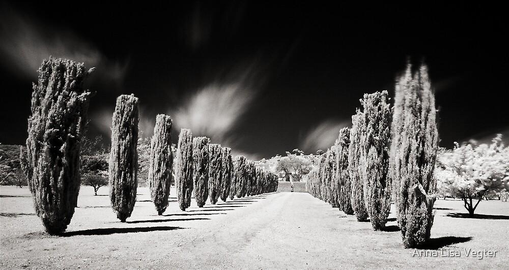 Tree line, Carrick Hill, S.A, Australia by Anna Lisa Vegter