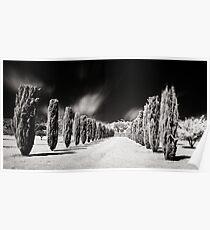 Tree line, Carrick Hill, S.A, Australia Poster