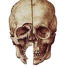 Da Vinci's skull by Ednathum