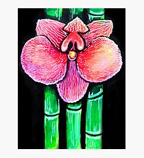 Orchid And Bamboo Photographic Print